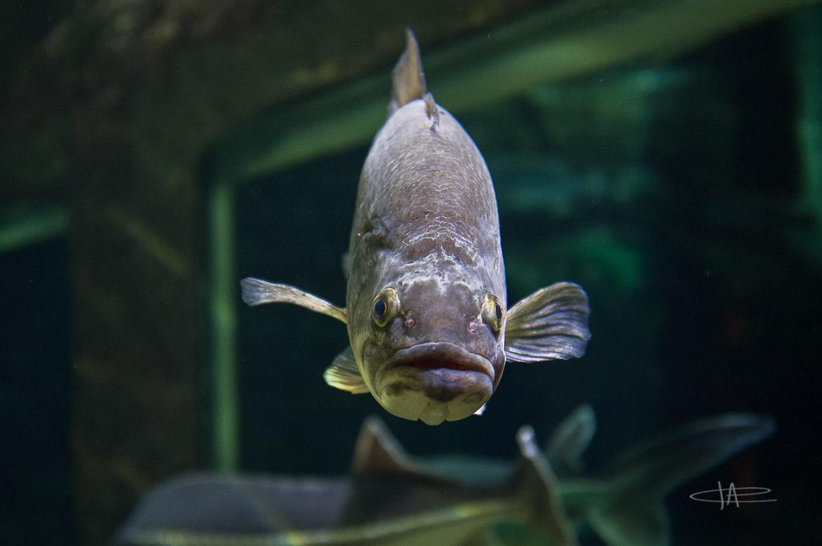 1- Aquarium -23 mm1-60 s à f - 2,0160556