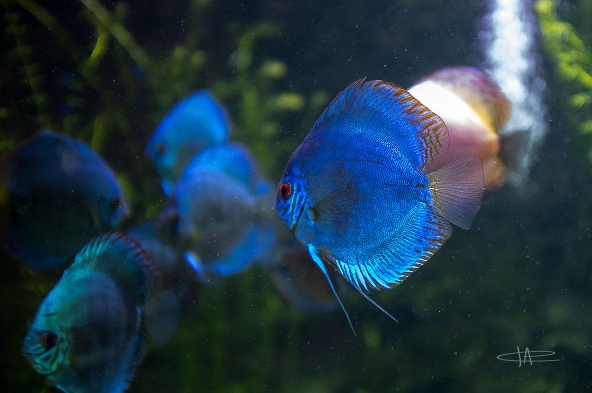 5- Aquarium -23 mm1-60 s à f - 2,0161829