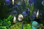 10- Aquarium -23 mm1-60 s à f - 3,2164927