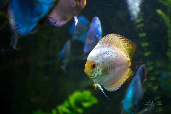 3- Aquarium -23 mm1-60 s à f - 2,0161811