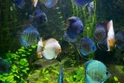 7- Aquarium -23 mm1-60 s à f - 3,2164926